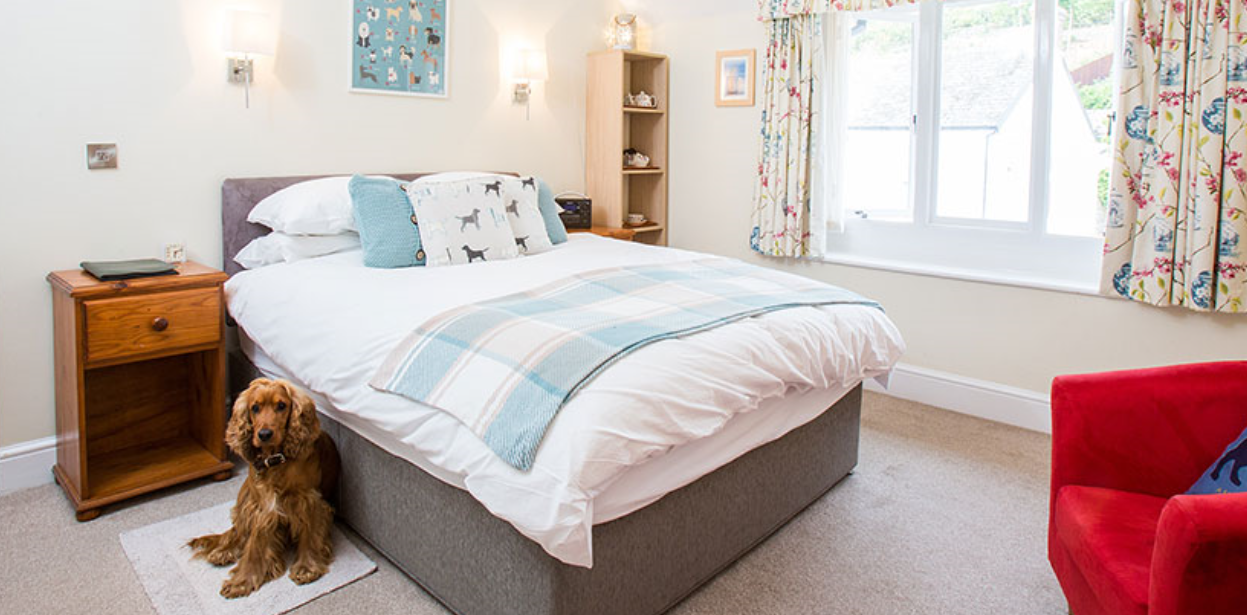 Westleigh Dog Friendly Bed and Breakfast, Beer