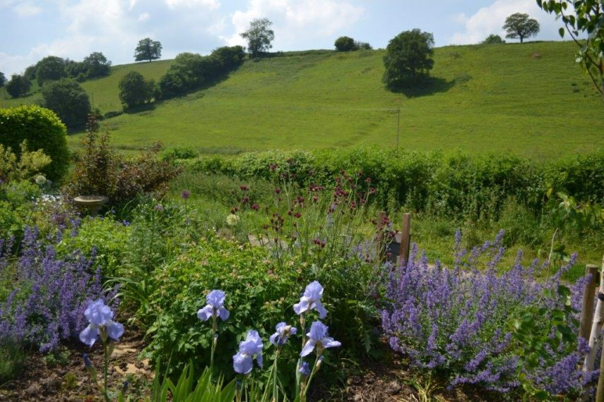 Lark Hill - Castle Cary Bed and Breakfast